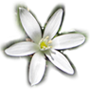 small star of bethlehem flower in the top navigation menu